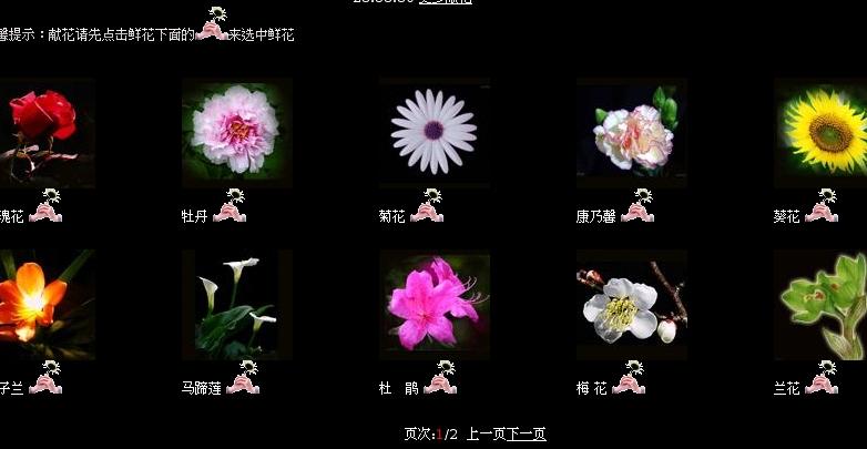 hommage fleur séisme